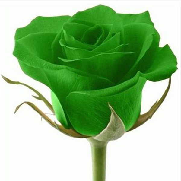 20X Beautiful Rose Flower Seed Colorful Seeds For Lover Petal Plants ...