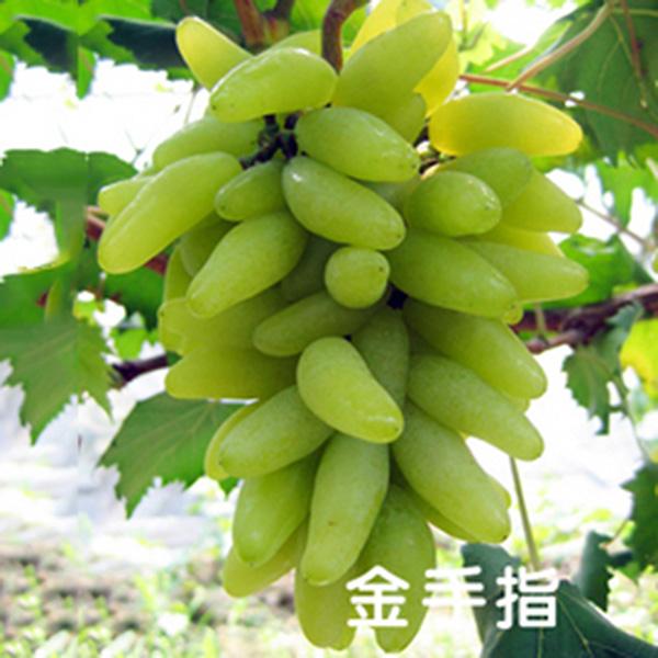 Multi Types 20pcs Grape Fruits Seeds Vine Plant Home Garden Farm