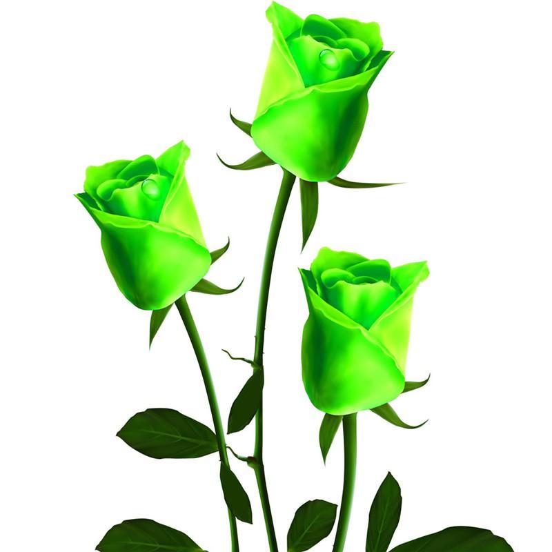 50 100 150pcs bunte rosen blumen samen yard hause garten for Pflanzen zu hause