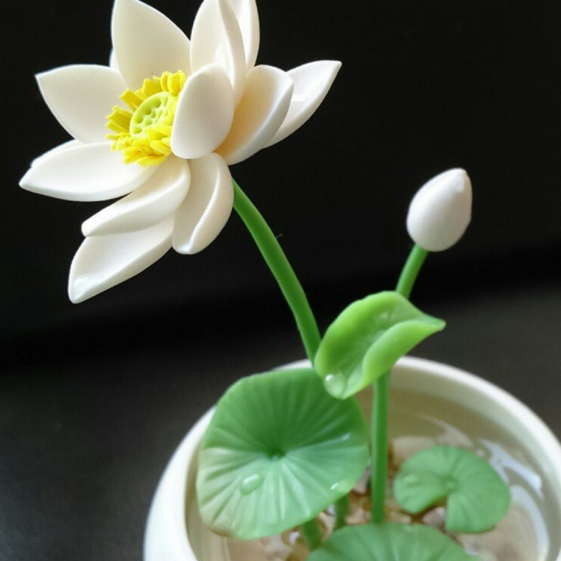 AU-10-100Pc-Water-Lily-Bowl-Aquatic-Hydroponic-Seeds-Planting-Plants-Home-Decor