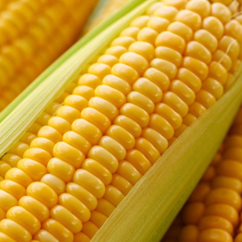 100pcs Sweet Rainbow Black White Yellow Indian Corn Seeds ...