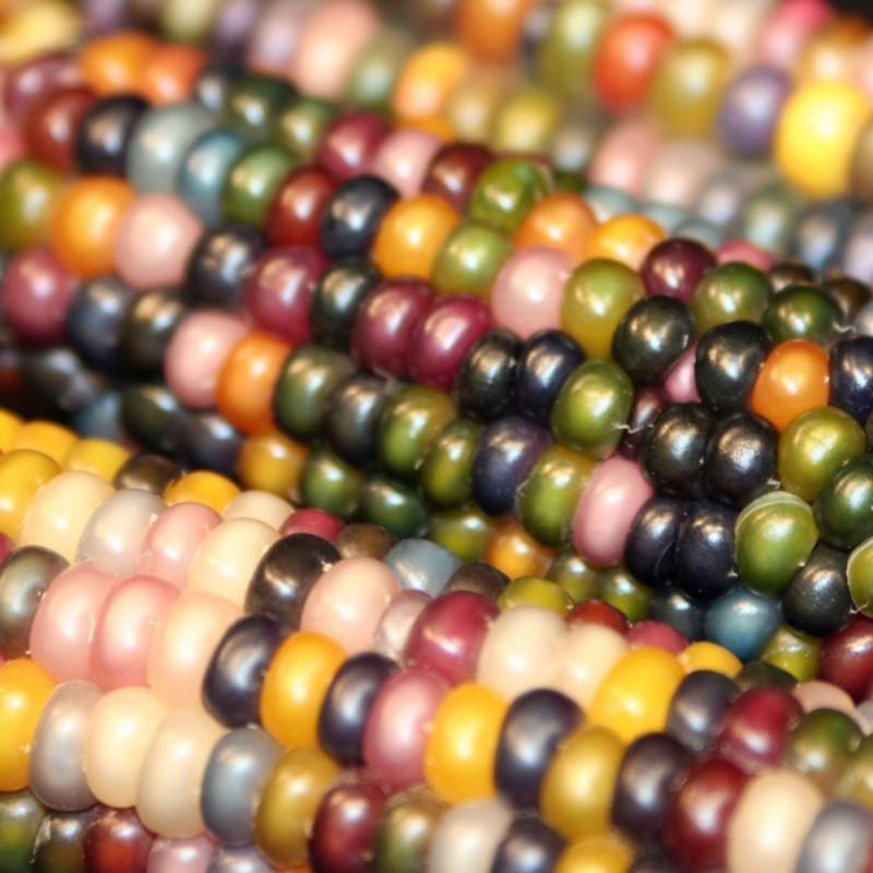Rainbow-Black-White-Yellow-Indian1-00X