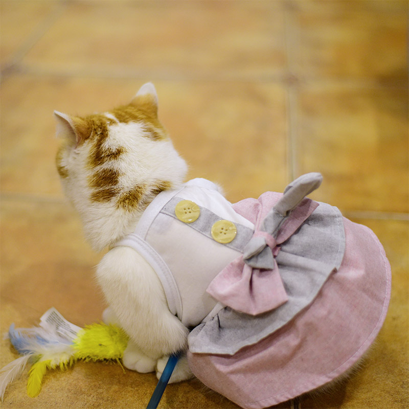Summer-Small-Pet-Dog-Flower-Tutu-Dress-Puppy-Cat-Vest-Bow-Skirt-Apparel-Clothes thumbnail 49