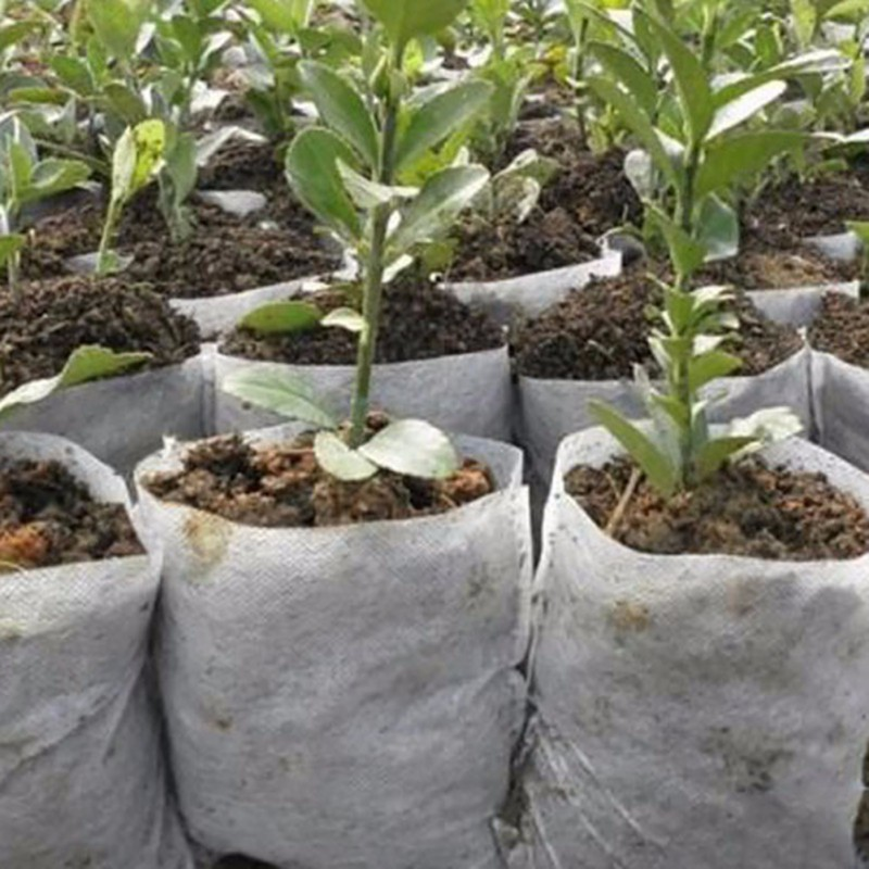 100pcs Seedling Raising Bags Plants Pouch Fiber Nursery ...